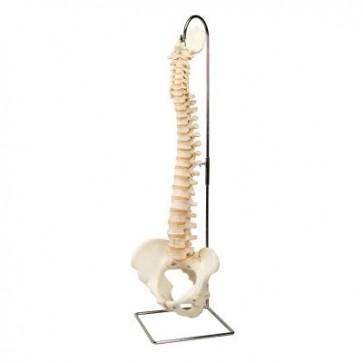 BONElike™ model kralježnice