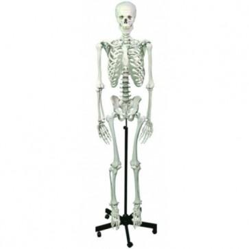 Standard human skeleton model (Delivery within 10 days)